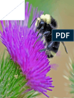 Bee on a Thistle.pdf