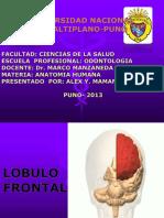 Neuroanatomia Lobulofrontal 140604182836 Phpapp01