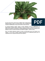 Plante Dangereuse