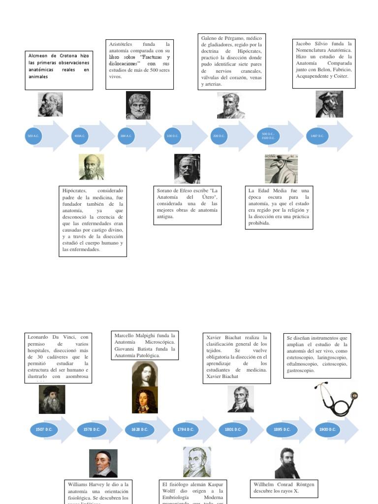 Encantador Historia De La Anatomía Y La Fisiología Línea De Tiempo ...