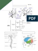 El Sistema Nerviosonivelpre