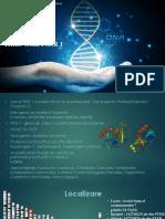 Gena PRSS1