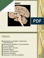 El Cerebro PNL
