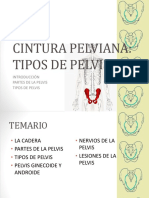 cinturapelviana-140810235042-phpapp01