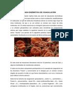 CASCADA ENZIMATICA.docx
