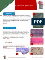 histologie_de_la_peau_1315203247209.pdf