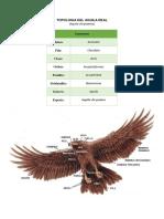 TIPOLOGIA - Aguila real