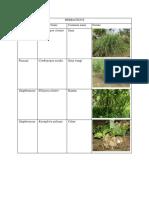 Plants Species