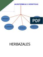 Herbazales y Algarrobales