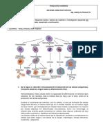 Taller de Sistema Hematopoyetico (1)