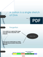 A Cistron is a Single Stretch of DNA