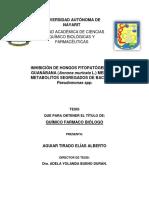 Inhibicion de hongos Fitopatogenos de Guanabana mediante bacteria Pseudomonas