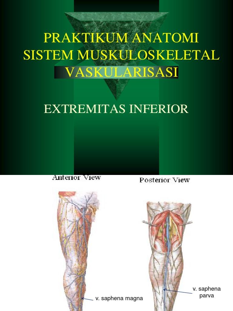 8. VASKULARISASI EXTREMITAS INFERIOR.pptx