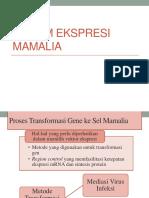 Sistem Ekspresi Mamalia