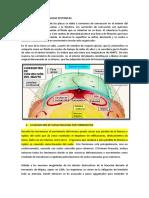 DE LAS PLACAS TECTONCAS.docx