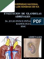 Adrenal Es