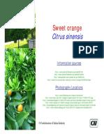 Citrus sinensis.pdf