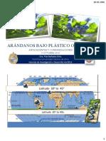 Arandanos Bajo Plastico.P. Bañados Oct 2016
