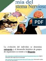 Filogenia Del Sn