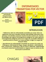 Enfermedades Trasmitidas Por Vector