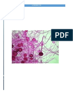 actinomicetesmonografia