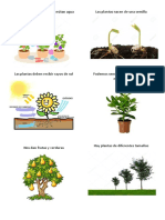 Las Plantas Necesitan Agua