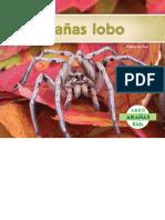 Aranas Lobo