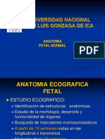 Anatomia Fetal.ram