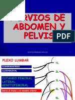 Nervios Del Abdomen y Pelvis