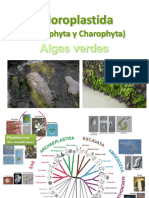 Clorófitas