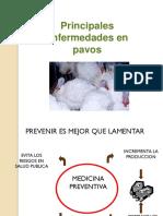 103711284-enfermedades-pavos