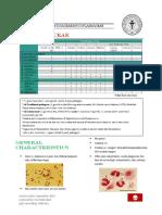 Neisseria Chlamydia Mycoplasma