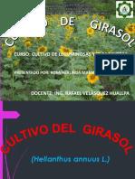 Cultivo-Del-Girasol[1]