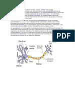 Neuron A