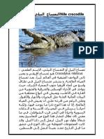 Nile Crocodile التمساح النيلي المصري