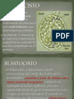 Embrio Ph Pii