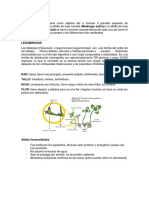 Alfalfa Informe