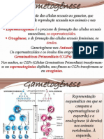 Sistema Rep. Humano e Gamet. - Gametogênese
