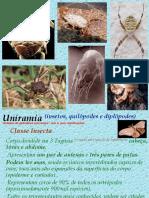 Artrópodes P2 - PH