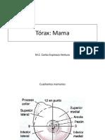 Torax Mama +