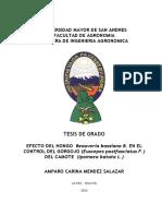 Efecto Del Hongo Beauveria Bassiana en El Control Del Gorgojo Del CamoteT-1228