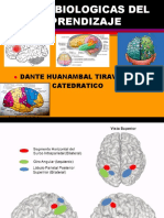 (1) Bases Biologicas Del Aprendizaje 1[1]