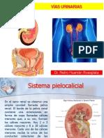 Anatomía Vías Urinarias