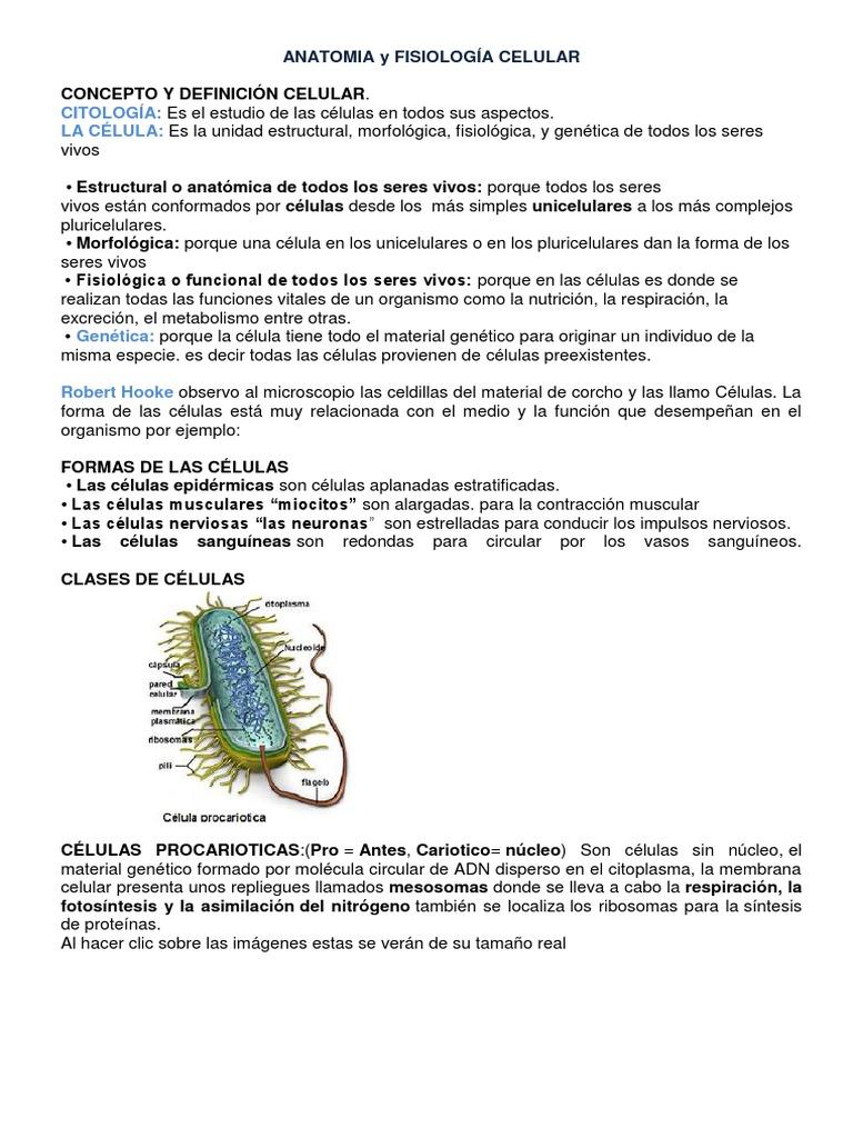 Asombroso Definición Anatomía Celular Molde - Anatomía de Las ...