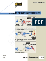Sistema Nervioso Periferico WEB