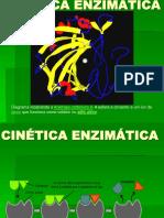 cineticaenzimatica