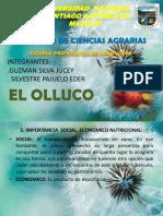 349994423-El-Olluco-Ppt-pptx333.pptx