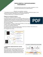 Ingeniería Genética y Microorganismos