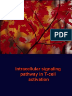 Intracellular Signaling Pathway in T-Cell Activation