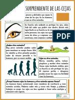 2. La Historia Sorprendente de Las Cejas